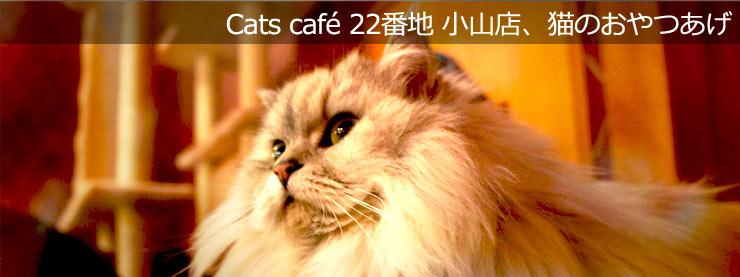22番地:猫のおやつあげのページ追加