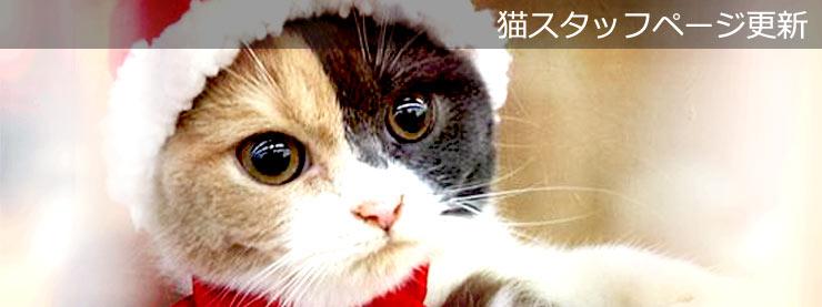 22番地:小山店:猫スタッフページ更新