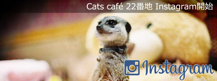 22番地:Instagram開始のお知らせページ追加