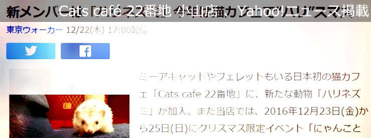"""22番地:Yahoo!ニュース掲載:新メンバーは「ハリネズミ」今年は猫カフェで""""ハリ""""スマスページ追加"""